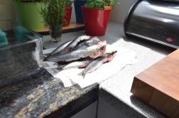 Sardine ripiene e fritte (3)