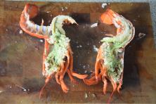 hummersalat-mit-gegrillten-trauben-und-mini-fenchel-14