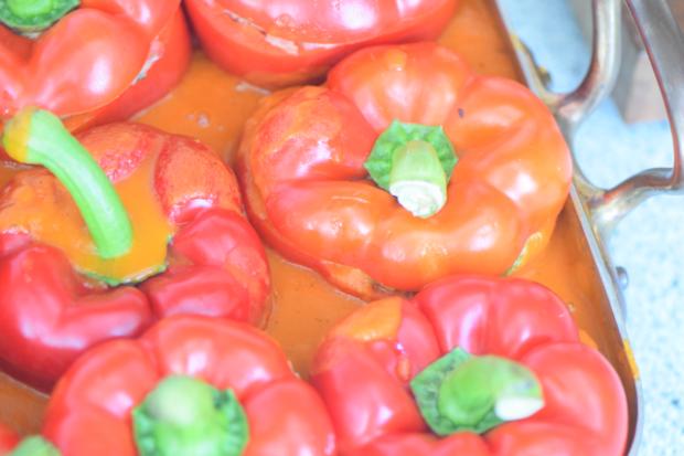 Holländische Paprika (10)