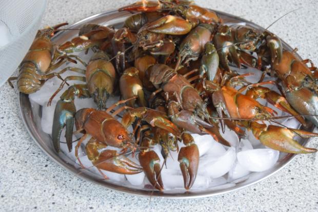 Seezunge mit Flusskrebsen und Sauce Nantua (2)