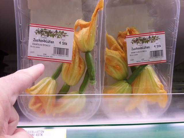 Zucchiniblüten im Winter (2)